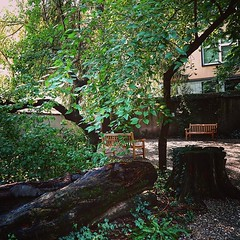 A tree returns to the garden soil In the Orto Botanico In the Brera District of Milan a tree is felled but left in place to benefit wildlife, fungi and the surrounding soil. It is also a great educational tool for explaining the soil cycle and other garde (dewelch) Tags: