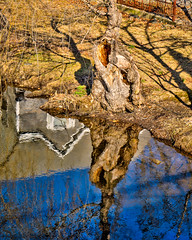 1 Wednesday Walk around the duck pond-2 (Singing With Light) Tags: 2019 27thjanuary a7iii ct foudnersway milford mirrorless singingwithlight sonya7iii street sunday aroundmilford cloudy cool morning photography singingwithlightphotography sony walk