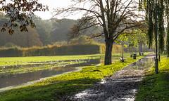 sunlit flooded parkland (seligr) Tags: uk london barnet park fields floowing water birds sunshine trees pathway autumn green benches bins llitterbins hedges reflections puddles