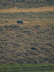 0622-J20 - Yellowstone - Cody-1808160913 (Chouettes de Crolles) Tags: 2018usa 2018usaj20yellowstonecody cody lieux usa vacancesété wyoming étatsunis us