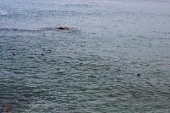 IMG_9778 (mudsharkalex) Tags: california pacificgrove pacificgroveca