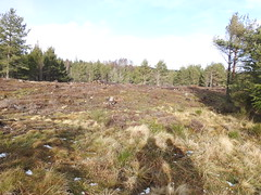 Cairngorms National Park (BSCG (Badenoch and Strathspey Conservation Group)) Tags: cnp cb felling february sunshine