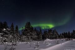 Z19_0150 LT (Zoran Babich) Tags: winter snow lapland lappi finland suomi northernlights auroraborealis