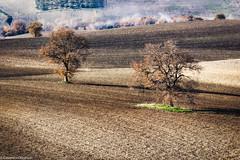 Coppia (SDB79) Tags: alberi terra campagna molise ururi paesaggio rurale