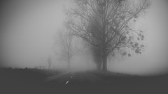 Road to awe (BalintL) Tags: road tree trees mist haze fog nature spring bw blackandwhite silhouette fade faded