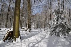 La blancheur de l'hiver (Excalibur67) Tags: nikon d750 sigma globalvision art 24105f4dgoshsma paysage landscape arbres trees forest foréts nature neige snow vosgesdunord