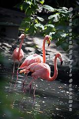 Pairi Daiza (gazoumou) Tags: vannerumsylvie gazoumou pairidaiza brugelette belgique belgium animal hainaut parc park wallonie zoo nature