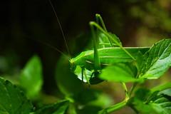 grasshopperの壁紙プレビュー
