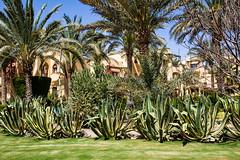desert garden (werner boehm *) Tags: wernerboehm marsaalam egypt aloe garedens desertgarden wüstengarten