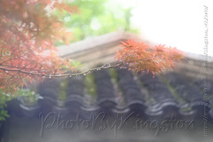 42989470622_fe0d14b411_b (Kingston4 Landscape) Tags: suzhou light rain fujifilm xt1 painterly feel m42 helios442 258 manual lens colors old bokeh bright watercolor painting