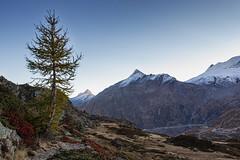 L'albero solitario (cesco.pb) Tags: simplonpass passodelsempione switzerland svizzera alps alpi vallese canon canoneos60d tamronsp1750mmf28xrdiiivcld alba dawn sunrise montagna mountains