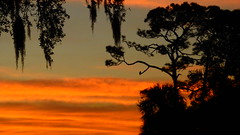 Osprey Sunrise (Jim Mullhaupt) Tags: sunrise sunup dawn sun morning sky clouds color red orange pink yellow blue tree palm silhouette weather tropical exotic wallpaper landscape bradenton florida manateecounty nikon coolpix p900 jimmullhaupt cloudsstormssunsetssunrises osprey fisheagle bird water pond lake swamp wildlife nature background outdoor photo flickr geographic picture pictures camera snapshot photography nikoncoolpixp900 nikonp900 coolpixp900