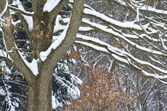Winter Snowing (Modkuse) Tags: lines snowing snow longlens longlenscompression cold winter nature natrual trees tree art artphotography fineartphotography fineart photoart fujifilm fujifilmxt2 xt2 xf55200mmf3548rlmois fujinon fujinonxf55200mmf3548rlmois cloudyday