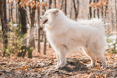 DSC02993 (Parfenova Natasha) Tags: weekend winter nature walking dog