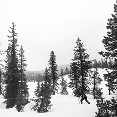 XC (Aaron Bieleck) Tags: hasselblad500cm 120film analog 6x6 square film filmisnotdead hasselblad mediumformat wlvf winter mthoodnationalforest bw blackandwhite crosscountyskiing 60mmct oregon pnw pacificnorthwest snow forest