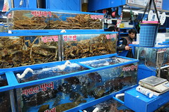 "Seoul Korea Garak Market seafood section featuring fresh catches - ""Blues-y"" (moreska) Tags: seoul korea garak market seafood lobster tank hangul indoor unstaged food shopping wholesale 가락 시장 blue renovated capital travel tourism rok asia"