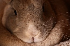 """""""Hey pal, the good thing about your memory ... you don't need me, you can hide your own Easter eggs."""" (Parowan496) Tags: easter eggs hunt rabbit bunny nose whiskers memory canoneos80defs55250mmf456is canoneos80d efs55250mmf456is"""
