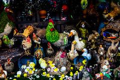 Easter Display (justingreen19) Tags: cockerel easter eastereggs easterdisplay greenpoint ny nyc newyork newyorkcity brooklyn bunnies bunny chicks display duck handmade hens justingreen19 newyorkphotography nycphotography rabbits shopfront shopwindow store storefront storewindow streetphotography urban urbanphotography
