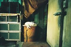 CNV000020 (雅布 重) Tags: fujifilm silvif28 xtra400 film 2016 snap cat keelung taiwan