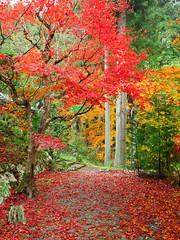 京都龍穏寺 Ryuonji Temple