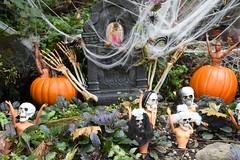 Barbie Pool Halloween (Amaury Laporte) Tags: 2018 dc districtofcolumbia barbie halloween misc northamerica offbeat usa unitedstates washingtondc barbiepondonavenueq