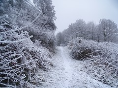 Frozen nature (v o y a g e u r) Tags: winter inverno hiver frost frozen snow neige nature sleeping blanc white season chemin camino path way tree forest wood bosco bois