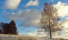 Erster Winterspaziergang 2019 (kadege59) Tags: winter nature tree birke baum thüringen thuringia albrechts clouds sky wow wonderfulnature weather deutschland canonpowershotsx230hs germany europe