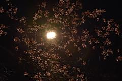 DSC_4215 (griecocathy) Tags: végétations arbre fleur branches lumière nuit noir blanc lumineux obscure