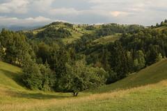 Rolling Hills Of Transylvania (Derbyshire Harrier) Tags: 2018 summer naturetrek woodland magura romania transylvania railway rural darkskies mountains meadow