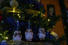 Owls (Marco le Méro) Tags: nikon nikkor 18 140 d5300 flickr christmas family noël famille europe france ardennes indoor intérieur blue bleu night nuit white blanc tree sapin de green landscape paisaje paysage winter december january hiver décembre janvier bird oiseau owl chouette house home maison foyer decoration décoration