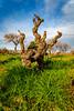Vigne de Terrats // 2019 // © F.Lombardo (F.Lombardo) Tags: vigne vin wine rouge terrats terre thuir byrhh byrrh terrassous blanc rose sec muscat rivesaltes beer vignerons sud france french bouteille plante bois nature