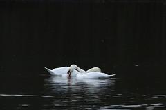 IMG_5088 (monika.carrie) Tags: monikacarrie wildlife scotland fyvie