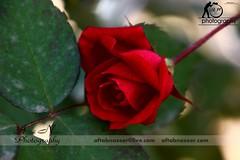 IMG_74621 (Aftab Nazeer) Tags: h