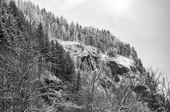 A bleak winter's day (maytag97) Tags: maytag97 nikon d750 winter snow blackandwhite bw monochrome forest tree hillside mountain side barren bleak sky fir pine oregon nature natural beautiful environment scenic columbia gorge landscape