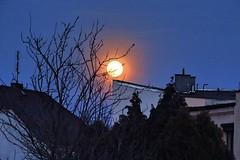 Moonrise, Kędzierzyn, Poland (leszek23) Tags: leszekpilarczyk piklesz photomaniac photomaniapolska streetphoto bnwphotography people polskafotografia landscapephotography sonydsc insectphoto naturphotography animals blackandwhitephotography architecture nightphoto monochrome photographyeveryday