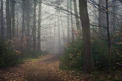 The Colors of Winter (Netsrak) Tags: baum bäume eu eifel europa europe forst landschaft natur nebel rheinland rhineland wald fog forest mist nature trees winter woods