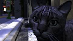 I am not a neko (Myra Wildmist) Tags: secondlife sl myrawildmist virtualart virtualphotography virtualworlds cat cats dox neko