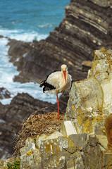 storks nest  1449 (_Rjc9666_) Tags: alentejo animais beach bird cabosardão cegonha coastline landscape nikond5100 ninho passaros portugal sea seascape stork tamron70200f28 wildlife storknest ©ruijorge9666 odemira beja pt 2312 1449