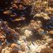 Underwater world. Coral reefs of Thailand         IMG_3435bs