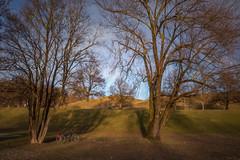 2019 Bike 180: Day 26, February 23 (suzanne~) Tags: 2019bike180 bike bicycle tree park munich bavaria germany winter