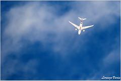 (Sir George R. F. Edwards) Tags: alitalia airbus a330 a332 pointeàpitre charter flight avgeek plane planespotter planespotting aviation aviationspotter aviationspotting airport psa lirp canon 7dmarkii