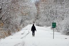 Snow walker (steve colwill) Tags: winter britannia snow ottawa