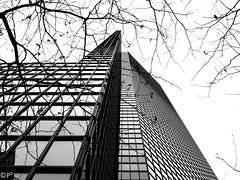 Branches... (THE.ARCH) Tags: 101parkavenue eliattia nyc newyorkcity newyork newyorkny ny blackandwhite bw skyscraper parkavenue trees branches treebranches