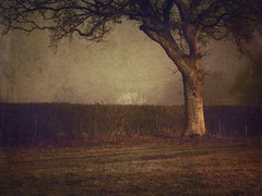 Catching the light. (Christine Padmore) Tags: light countryside hedges mystery oak tree england