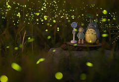 TOTORO (hosihane) Tags: 台灣 嘉義縣中埔鄉 嘉義大學 社口 林場 森林 螢火蟲 龍貓 小梅 站牌 草皮 totoro トトロ firefly 蛍 sony a7m3 a7iii gm lens
