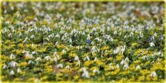 20 March 2019 - Spring Equinox (Ioan BACIVAROV Photography) Tags: 20march2019 spring equinox nature flower floerts