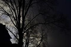 blue spot tree house (fdfotografie) Tags: tree house baum bäume haus ast äste stamm zweige kahl ausschnitt flora pflanze silhouette himmel wolke schwarz dunkel hell grau blau architektur muster struktur outdoor tageslicht dslr farbfoto querformat d7500 expressiv serie blue