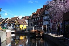 quartier de la poissonnerie (Colmar, F) (pietro68bleu) Tags: alsace hautrhin maisonsàcolombages rivière lauch pont prunusenfleurs