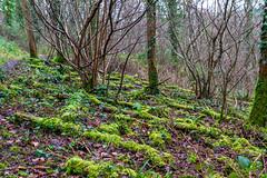 Peak Hill-1-3 (Sheptonian) Tags: somerset rural scenic landscape trees fauna grassland
