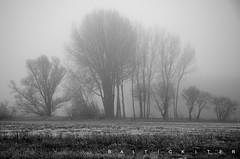 20.01.2019 Vormittag (baltickiter) Tags: ostsee natur nebel nikond5100 wasser vögel strand salzhaff